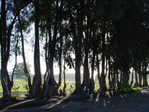 BackLit_Trees2