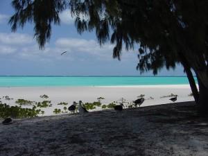 BeachShade