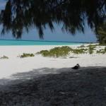 BeachShade3