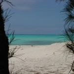 Beach_Side_Tree_Framed