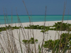 Beach_Through_Grass1