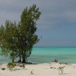 Beach_Tree4