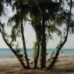 Beach_Tree_4