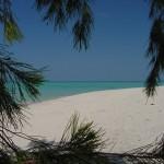 Beach_Trees