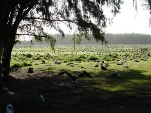 Bird_Yard