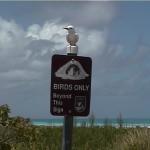 BirdsOnlyWithBird