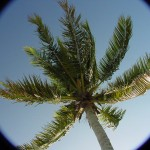 Coconut_SkyView