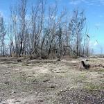 Eastern_Dead_Trees