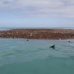 Floating_Birds_Debris