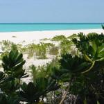 Foilage_Beach