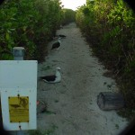FregitPoint_Trail