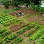 Garden_HiView1