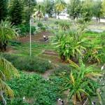 Garden_Hi_View