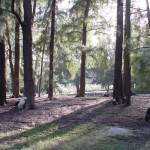 Lit_Trees