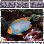 Midway Fish Shirt