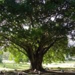 Nice_Tree