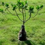 One_Tree_Left