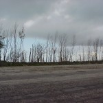 RustyBucket_Trees1