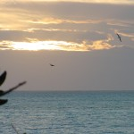 Sky_Ocean_Birds