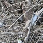 Stuck_Albatross