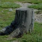 StumpShade