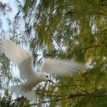 Tern_N_Flight23
