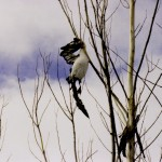 Tree_Dead_Bird