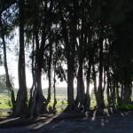 Trees_Backlit