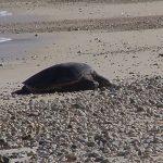 Turtle_Turtle_Beach