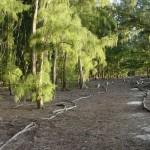 West_Beach_Trail1