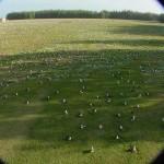 Wide_Field_O_Goonies