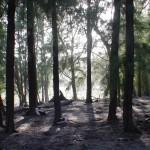 Woods_BackLit